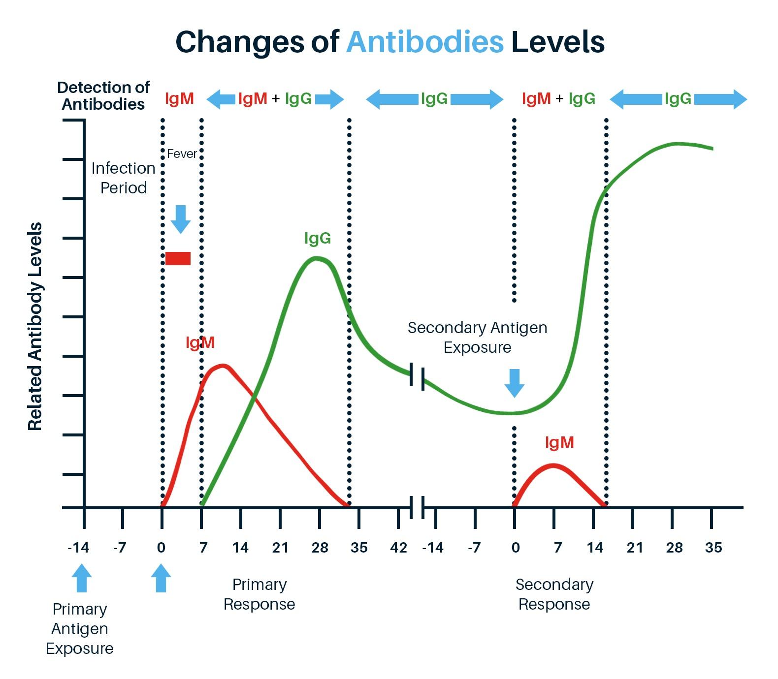 CoronaSafe - Changes of Antibodies Levels