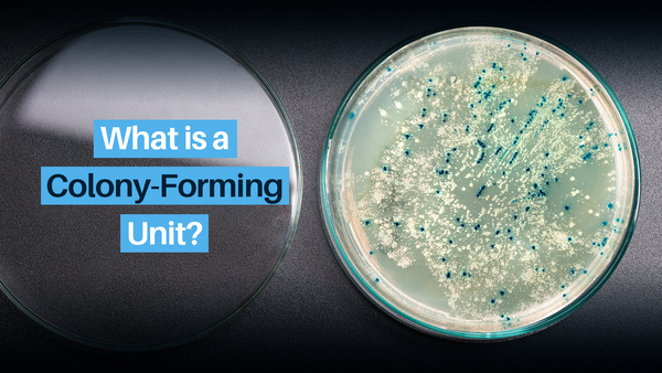 What is a Colony-Forming Unit?